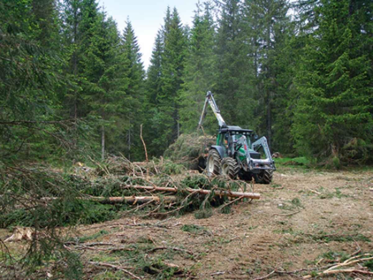 Le potentiel du bois-énergie en pâturage boisé dans le canton de Neuchâtel